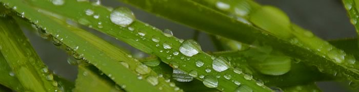raindrops.jpg - 23,13 kB